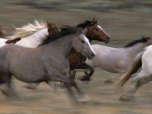 Running-Horses-Herd-Mustangs-Horse-At-Run-Free-462589-1024x768