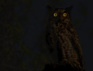 great-horned-owl-night_