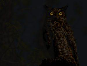 great-horned-owl-night_